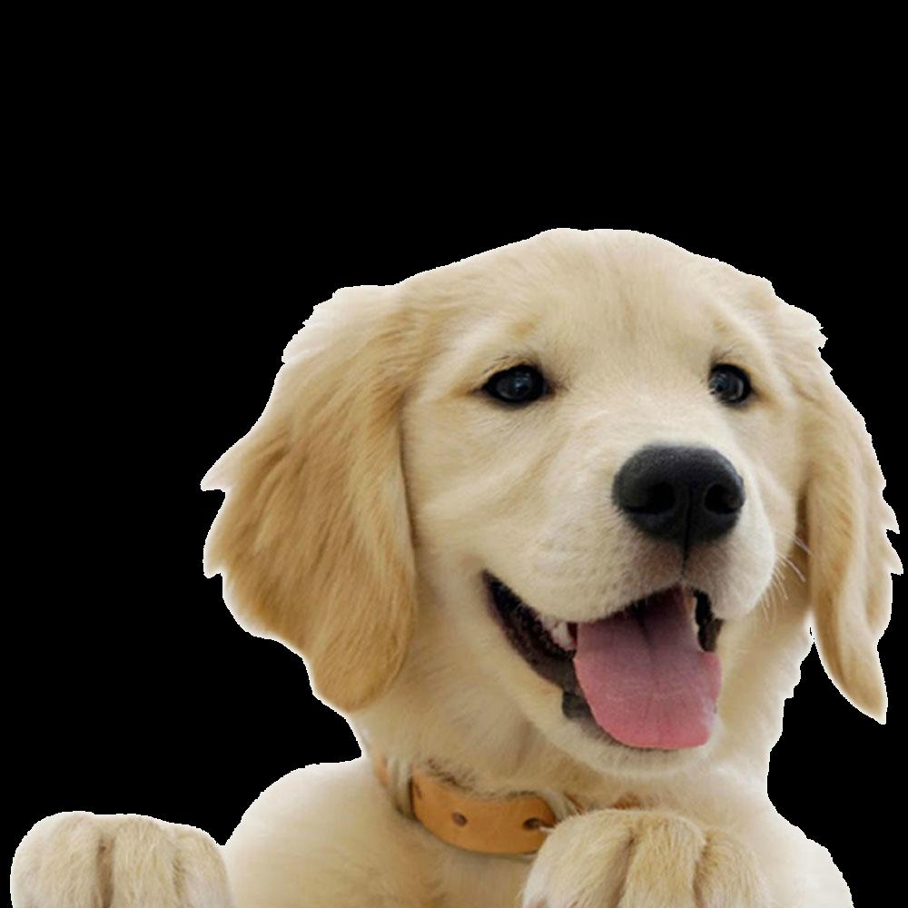 ветеринар на дом спб 123